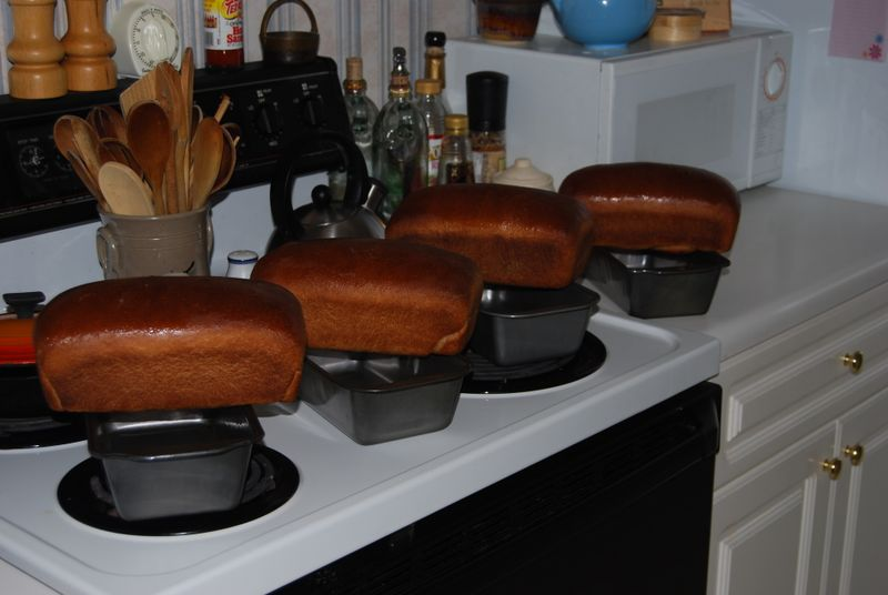 Four beautifully browned loaves